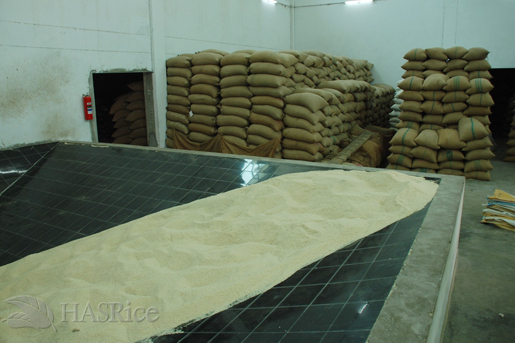 Raw Rice Feed to Mill